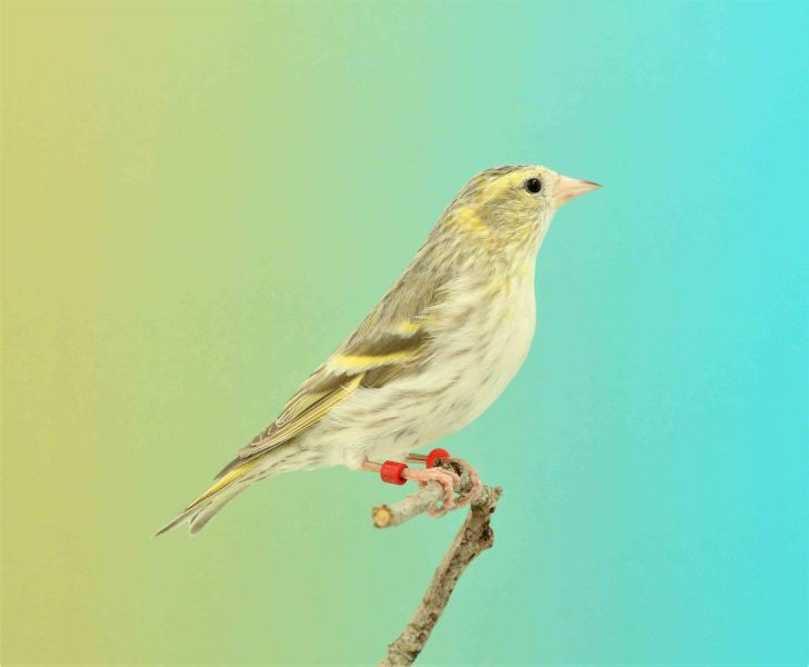S-063-Sijs-mdw-niet-bepaald-190220119-002-3