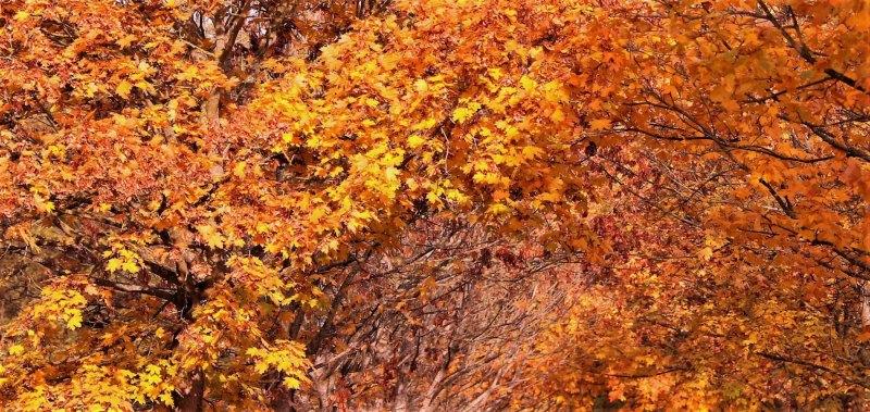 Site-herfst-006-002