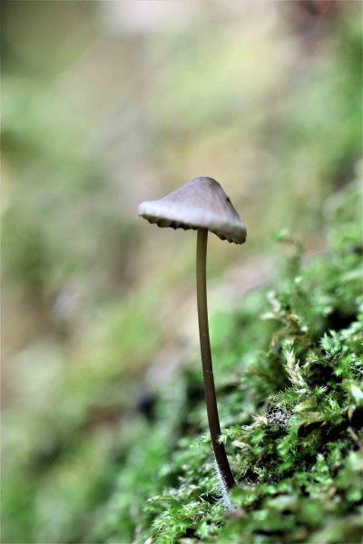 Site-herfst-041